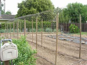 The bean arbor in May, 35' long, 4' wide, 7' high