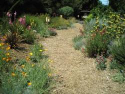 Path in the Water Wise Garden