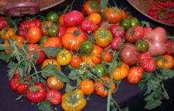 tomato fest Karen