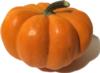 Pumpkin photo: Rosalie Shepherd