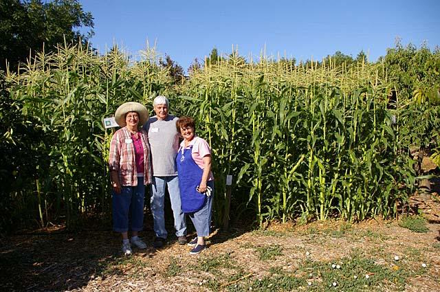 Cornfield with Master Gardeners