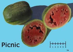 Picnic watermelon