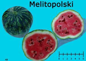 Melitopolski watermelon