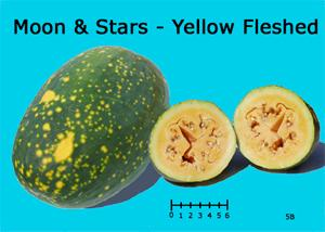 Moon & Stars Yellow Fleshed watermelon