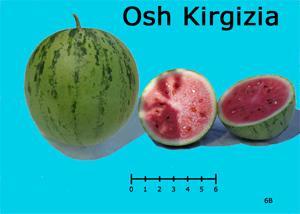 Osh Kirgizia watermelon