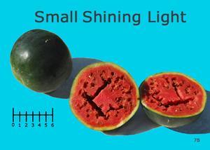 Small Shining Light watermelon