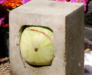 Watermelon in cinder block