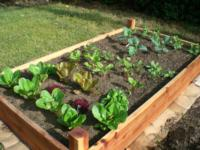 Raised bed, Raul Lozano