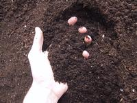 Soil in hand Getty Free Mike Berg